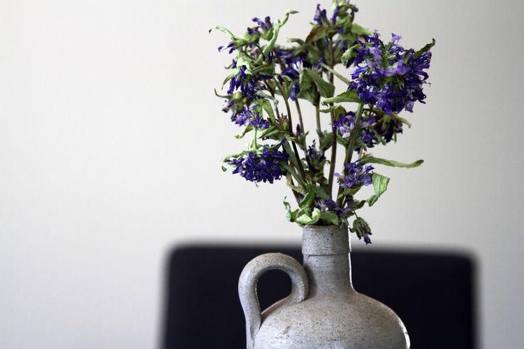 Close-up of flowering plant in vase against white wall