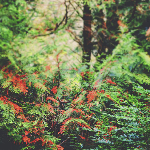Nature Tree Beauty In Nature Outdoors Green Color Forest Leaf The Collection The Week On EyeEem EyeEm Gallery