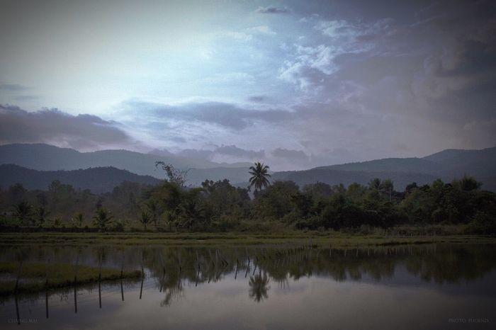 Near Chaing Mai Chaing Mai Reflections Landscape Palm Tree Thailand
