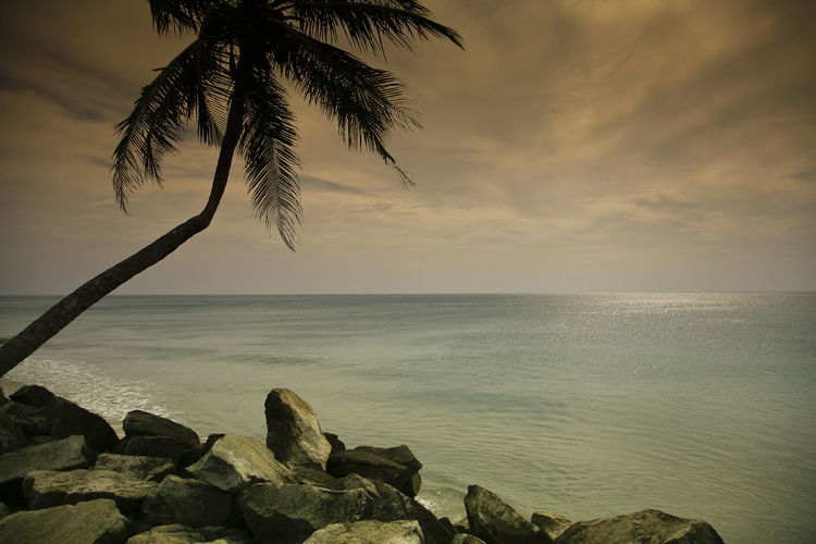 Ocean view, Varkala, Kerala, India Alleppey Coconut Trees India Kovalam Beaches Malabar Coast Varkala Beach Aleppey Backwaters Beaches House Boat Kerala Palms Sea Temple Water Sky Beauty In Nature Scenics - Nature Horizon Horizon Over Water Tranquility Beach Tropical Climate Palm Tree Tranquil Scene Tree Nature Land Rock Solid Rock - Object Cloud - Sky No People Outdoors Coconut Palm Tree