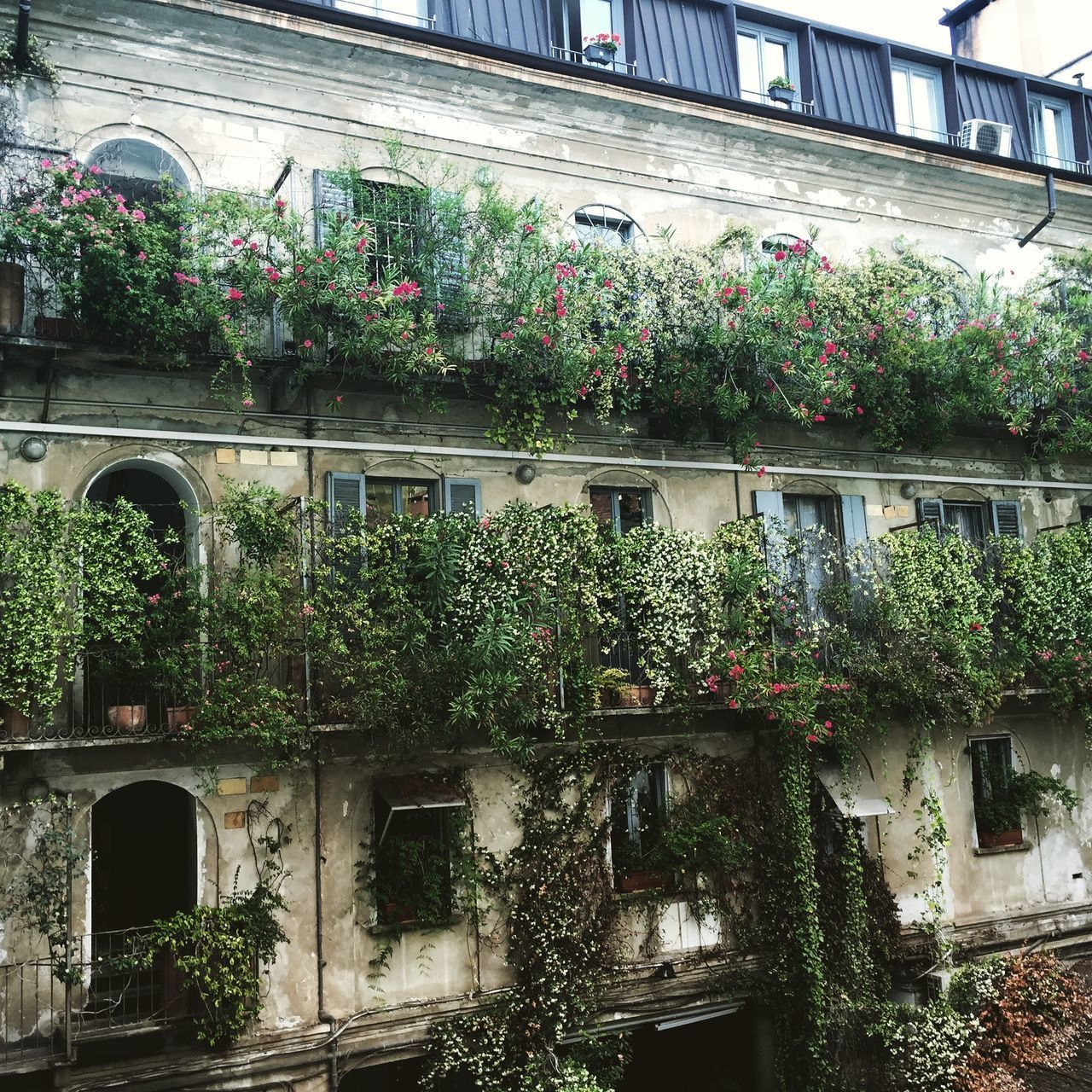 plant, architecture, growth, creeper, ivy, building exterior, growing, built structure, flower, nature, outdoors, window, no people, tree, day, green color, leaf, beauty in nature, window box, freshness