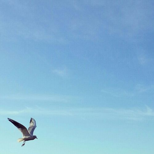 Coming in to land... Sky Skyscape Lookingup Naturelovers Putabirdonit Nature