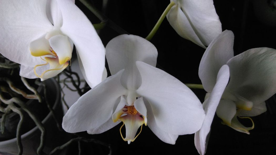 Macro Beauty Orchird  Orchidee. Orchid Orchidflower Flowers At Home Nature's Diversities Samsungphotography Samsung X5