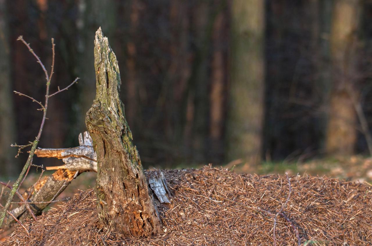 Logs On Field In Forest
