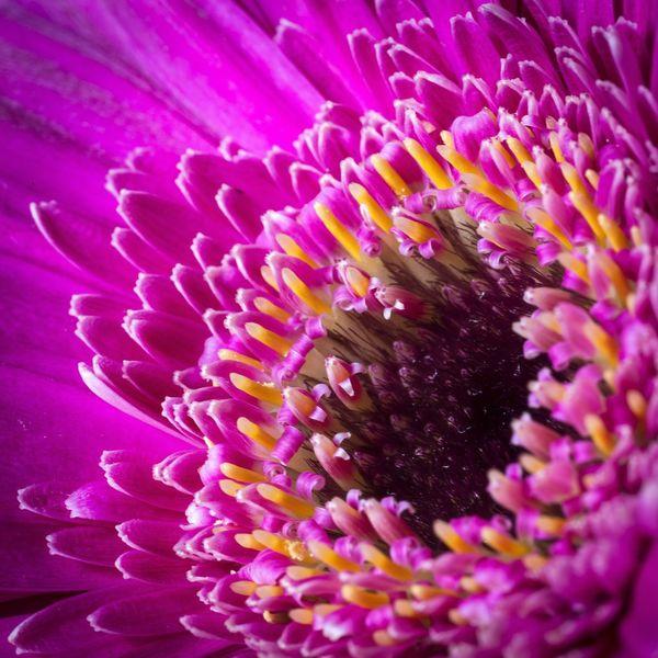 Macro Flowers Vivid Colours  Still Life