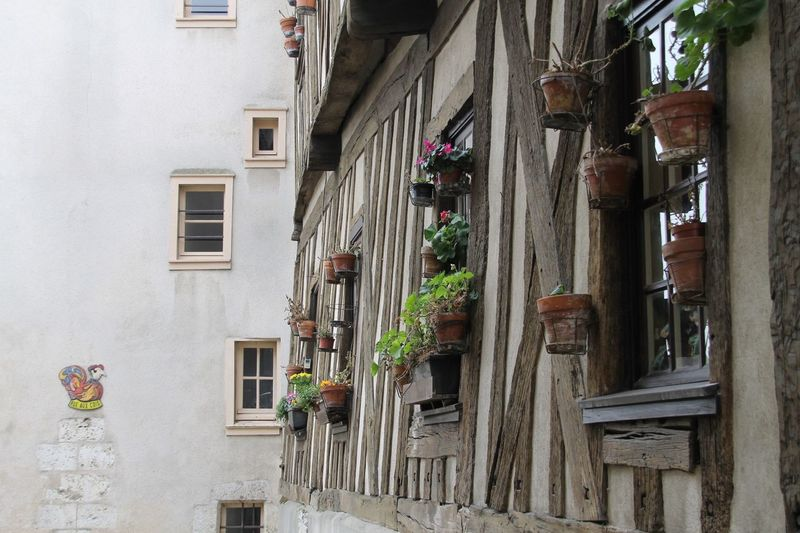 Potted Plants On Window Against Building