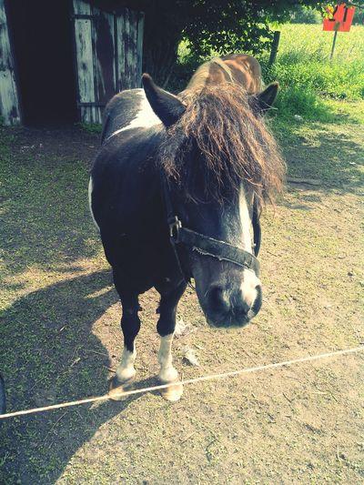 Horse Good Weather ♥ Hihi <3 Sun #love #my #horse:-*