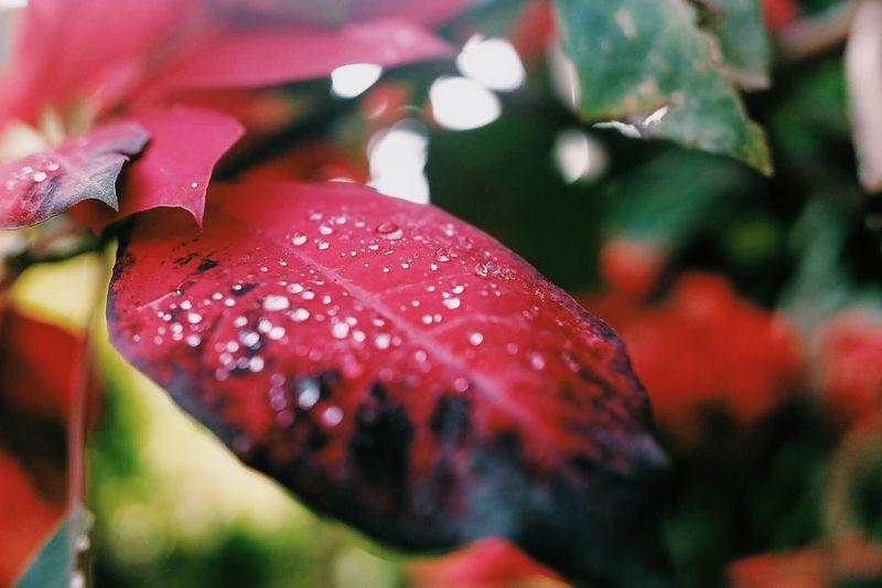 Sagada 2016 Leaves Coldbreeze Fujiph