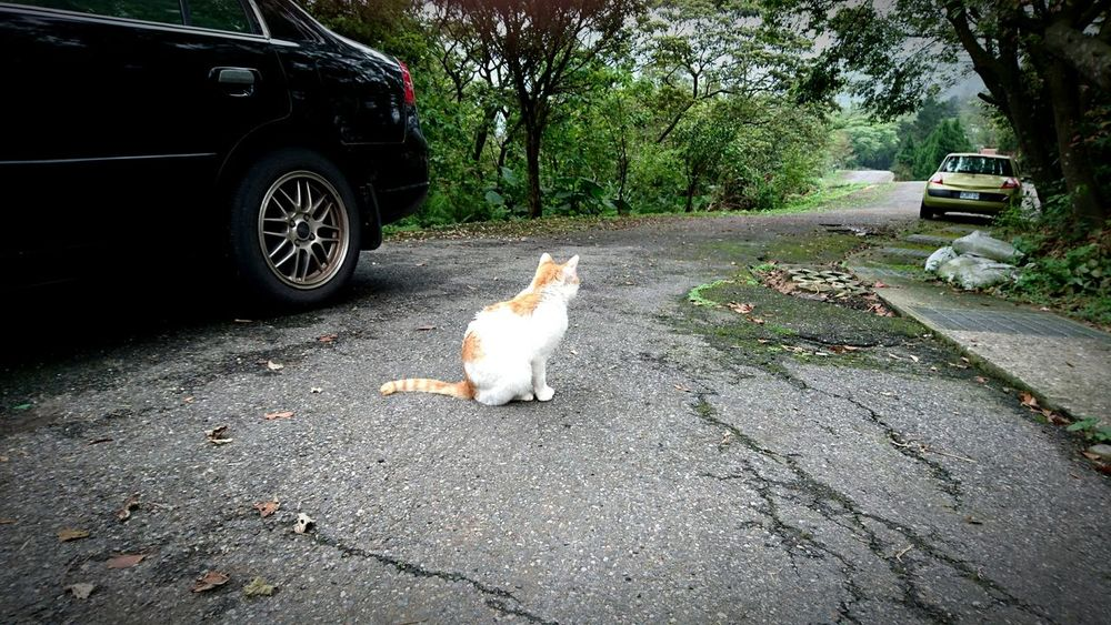 Spring daylight Homeless Cats 基隆寵物銀行 Alternative Fitness