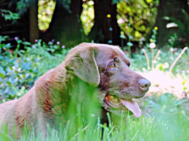 Dog One Animal Pets Animal Themes Domestic Animals Mammal No People Focus On Foreground Day Outdoors Grass Close-up