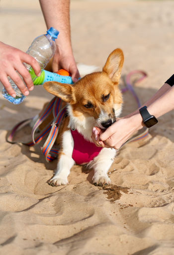 Cropped hand of couple giving water to dog on beach