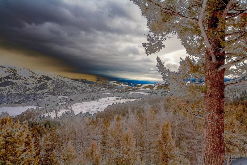 Color Infrared of Lamar Valley in Yellowstone National Park Color Infrared Post Processing Cloud - Sky Sky Tree Nature Plant No People Beauty In Nature Tranquility Scenics - Nature Tranquil Scene Day Environment Land Outdoors Winter Cold Temperature Snow Non-urban Scene Low Angle View