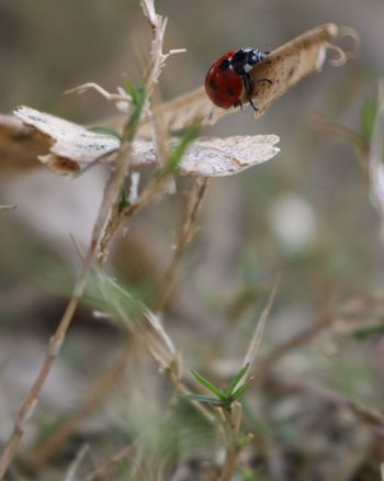 Insect Animal Wildlife Red One Animal Animals In The Wild Animal Themes Nature Close-up Ladybug Outdoors Day No People Grass EyeEmNewHere