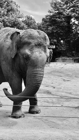 Elephants Hagenbecks Tierpark Hamburg  Zoo