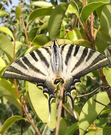 Mariposa En La Naturaleza Mariposa Butterfly Pretty Beautiful