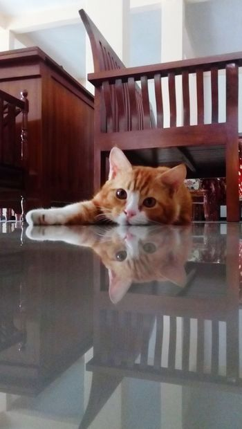 What are you doing ? Pet Portraits INDONESIA Pets Tebingtinggi