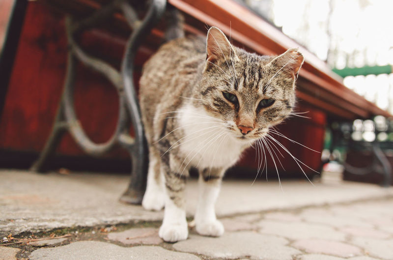 Close-up portrait of a cat outdoors