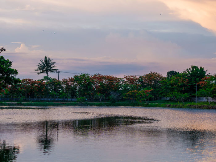 Thai view Tree Water Sky Plant Cloud - Sky Reflection Scenics - Nature Beauty In Nature Sunset Tranquility Waterfront Nature Lake Tranquil Scene No People Non-urban Scene Idyllic Growth Outdoors