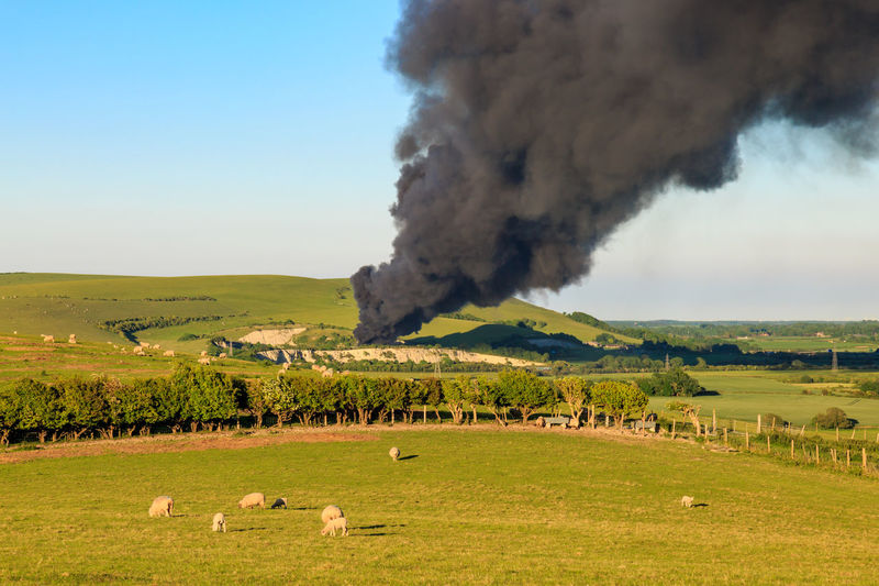 Sheep grazing on field against black smoke