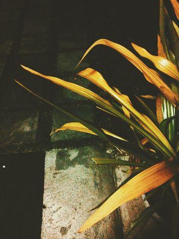 Plants Photo Photography Vintage VSCO Vcsocam Minimal Minimalist Minimalism EyeEm Nature Lover EyeEmNewHere