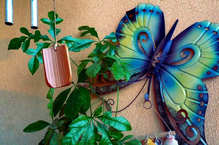 Fine Art Photography 📷 ... Zen Yin & Yang Good Vibes No People Butterfly On The Wall Objects From My Point Of View Relaxing Moments Balancing Elements The Fifth Element Connected With Nature