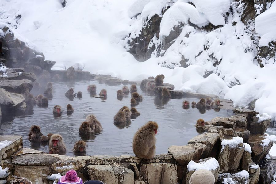 Cold Temperature Winter Nature Snow Weather Beauty In Nature Frozen Tranquil Scene Tranquility Ice Day Water Outdoors No People Cold Snow Monkeys Hot Spring Travelers Travel Destinations 地獄谷野猿公苑 Animal Wildlife Japanese Macaque Animals In The Wild at Jigokudani-Snow-Monkey-Park Nagano Prefecture,Japan