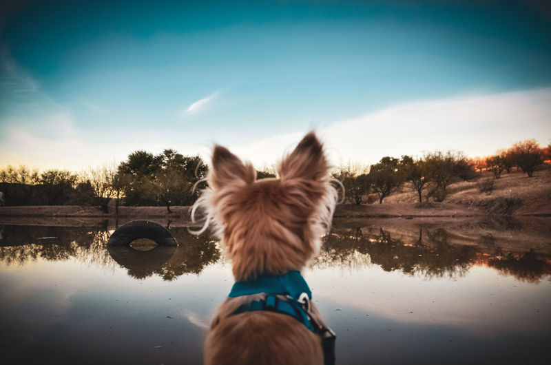 Rear view of dog on lake against sky