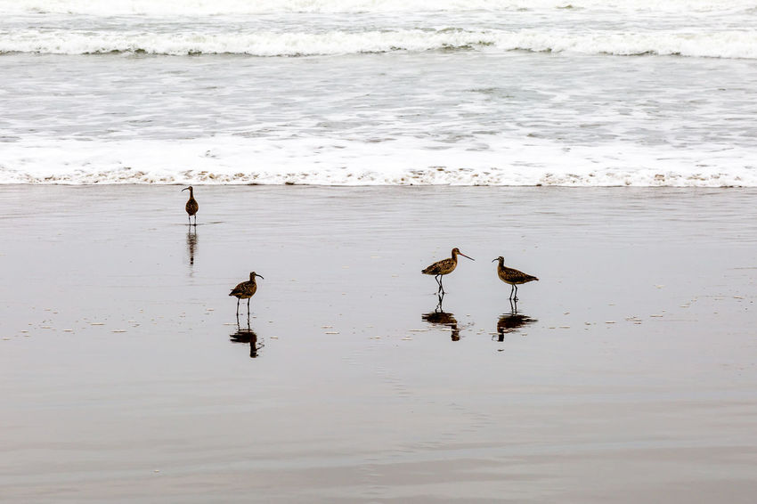 Birds standing on the seashore Animal Themes Animal Wildlife Animals In The Wild Beach Beauty In Nature Bird Curlew Day Nature No People Outdoors Reflection Sea Water Wave