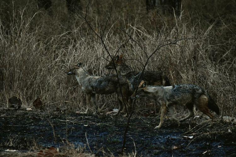 Pastel Power Wildlife Wild Dogs