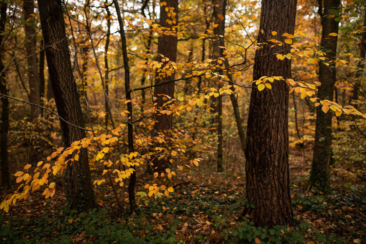 Forest Tree Land Autumn Plant Tree Trunk WoodLand Trunk Nature Beauty In Nature Tranquility Change Plant Part Outdoors Leaf Tranquil Scene Scenics - Nature Environment Growth Day No People Autumn Collection