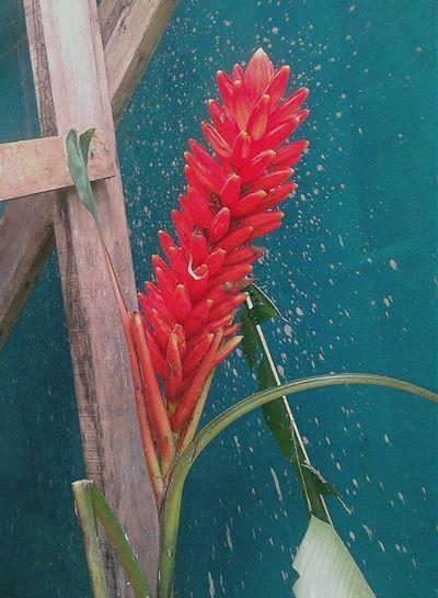 Eva Percich Eliconia Costa Rica Flower Flor Caribbean