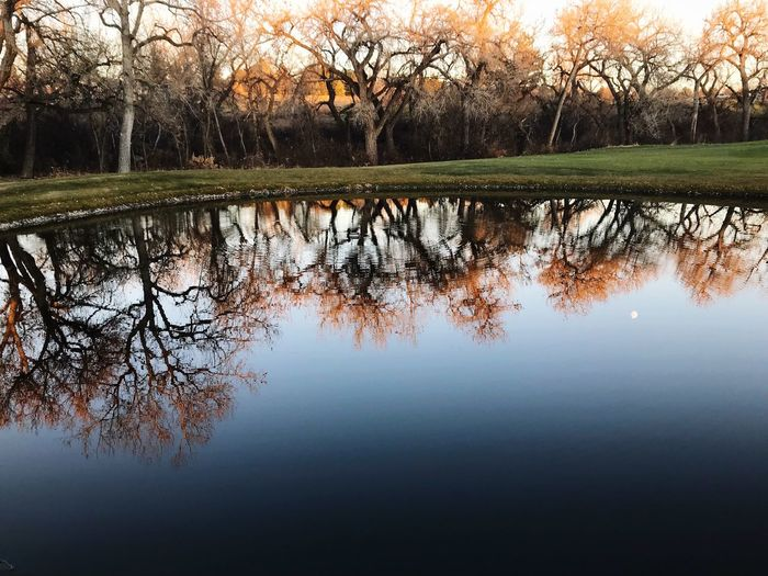 Reflection Lake Water Tranquility Nature Tree Tranquil Scene Standing Water Scenics Outdoors Grass Day Waterfront Beauty In Nature Sky Bare Tree Idyllic