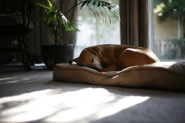 Sleepy Sundays Relaxing Pets Dreaming Eye4photography  Dogs Ilovemydog Portrait