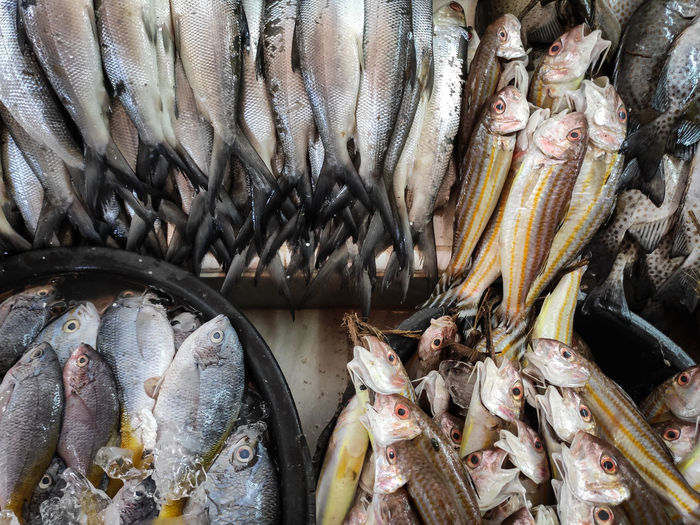 Fishes for sale at market stall