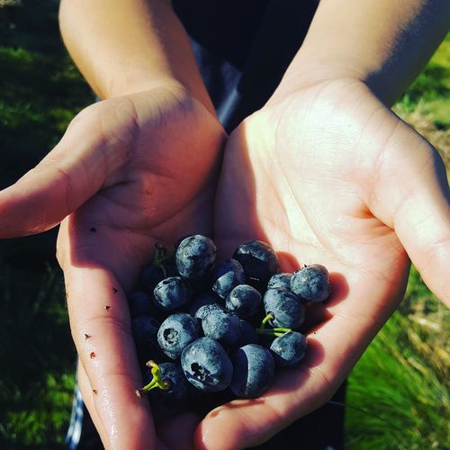 Cropped Image Of Hand Holding Berries