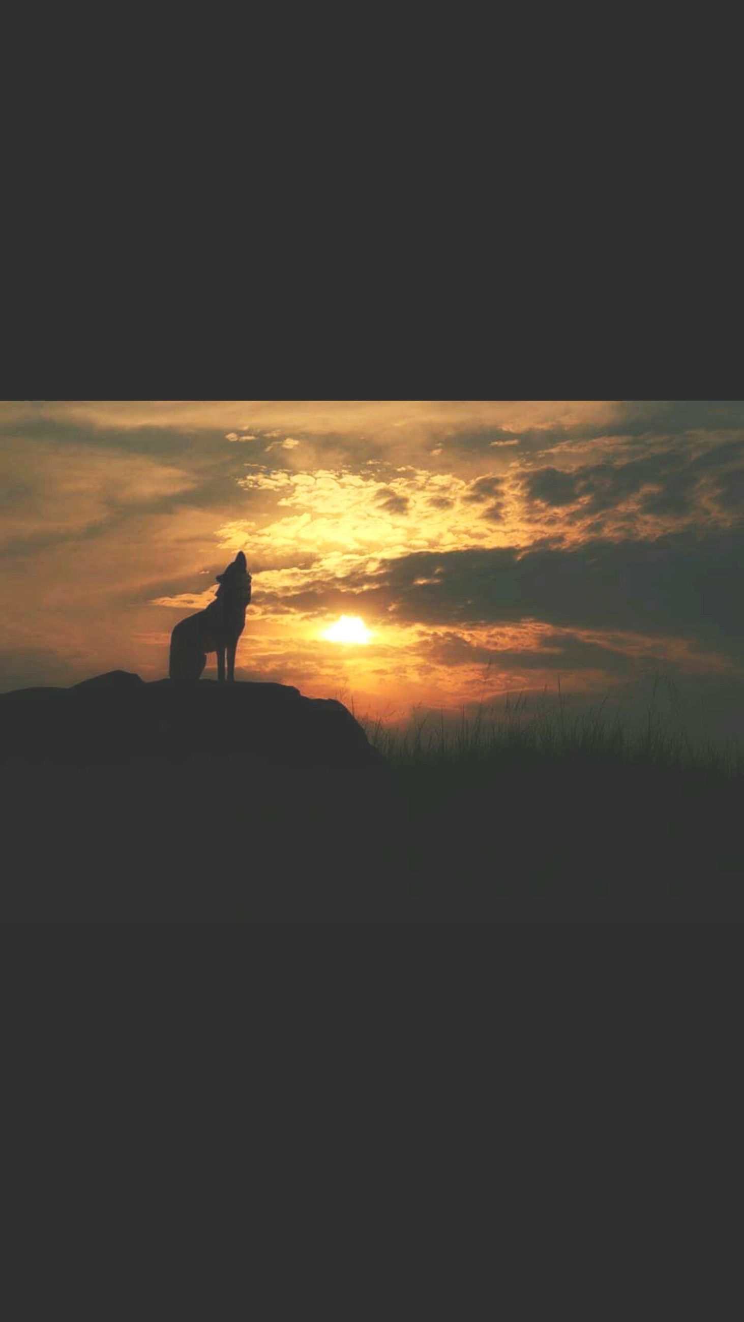 sunset, silhouette, animal themes, one animal, orange color, sky, bird, animals in the wild, wildlife, sun, beauty in nature, domestic animals, nature, scenics, tranquility, tranquil scene, mammal, copy space, outline, sunlight