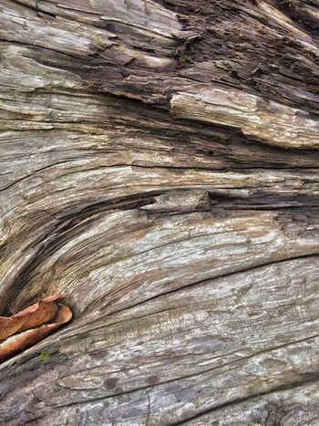 Scenery Surfaces And Textures Driftwood Wood - Material Pattern Textured  Day Full Frame High Angle View Backgrounds Close-up Nature Wood Brown Rough Cracked Natural Pattern Outdoors Tree Sand Land Sunlight No People