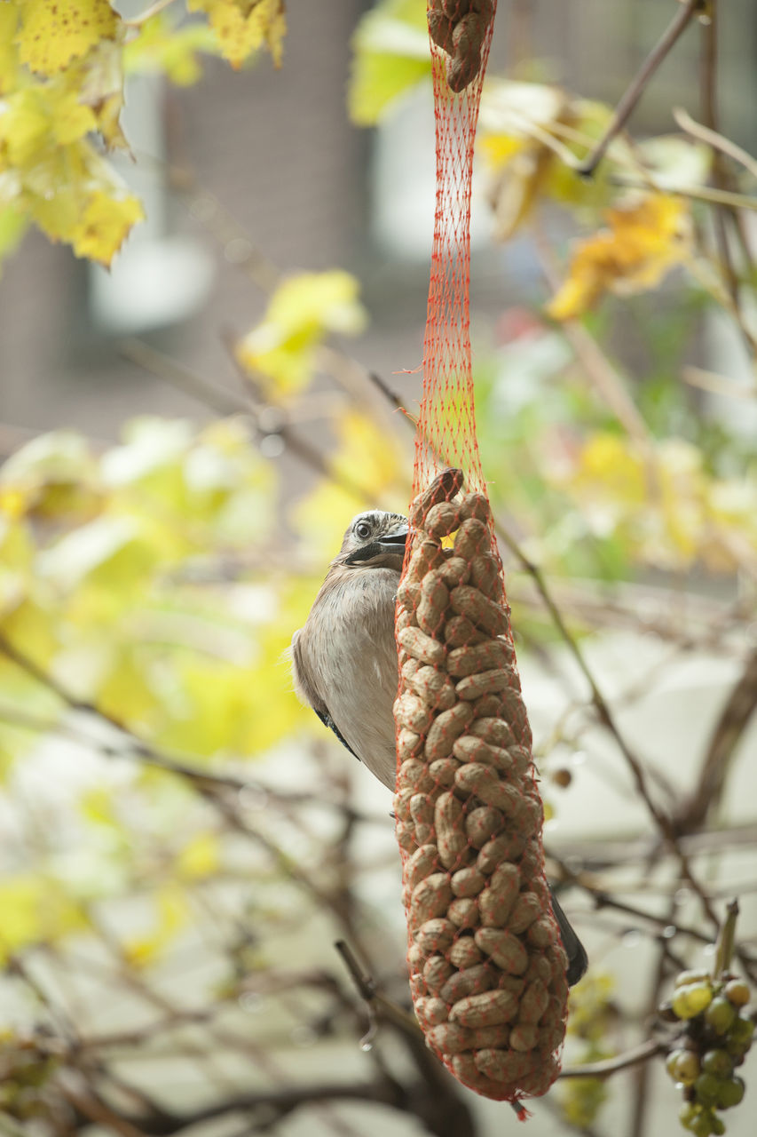 Bird Perching On Feeder Hanging By Plant