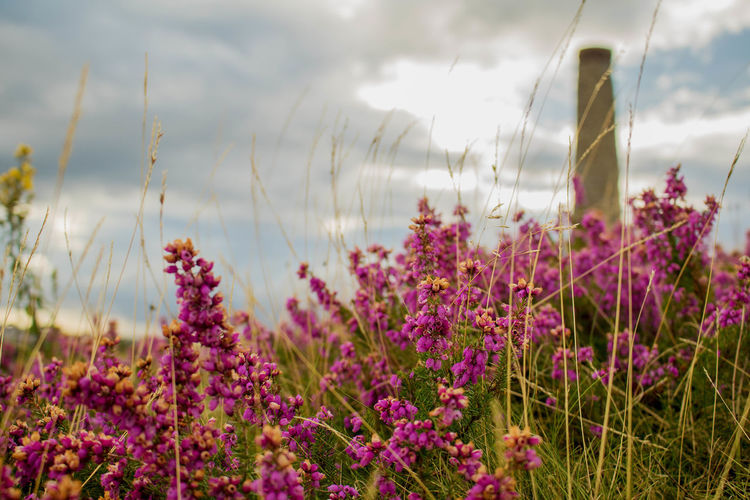 Flower Cloud - Sky Nature Plant Purple Sky Landscape Day Wildflower Outdoors Tranquil Scene No People Beauty In Nature Tranquility Growth Travel Destinations Scenics Close-up Grass Flower Head Heather Bristol Troopers Hill