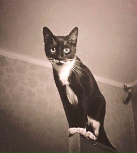 Strong Cat Cute Beaty Blackandwhite Monochrome Vintage Retro Lookingup Look Pets