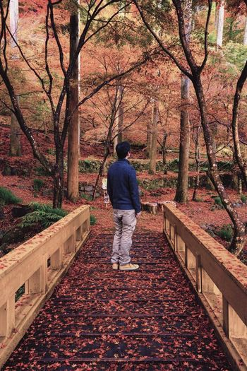 Tree One Person Rear View Real People Full Length Plant Autumn Tree One Person Rear View Real People Full Length Plant Autumn Nature Men Leaf Outdoors Standing