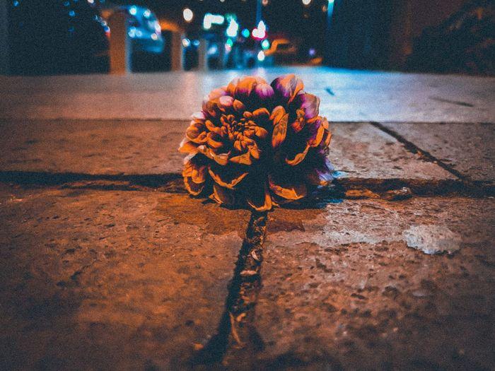 Close-up of orange rose on street at night