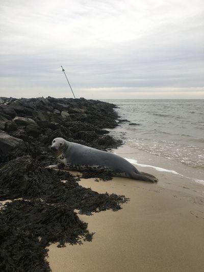 Seals Water Sea