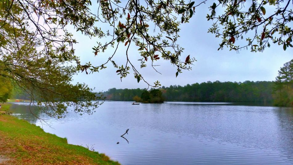 Beautiful Spring Day on the Lake 💙 -- Landscapes With WhiteWall Spring Day Lake HDR Nature Landscape Trees Branches Landscape_photography Water Beauty In Nature EyeEm Nature Lover Water_collection Water Reflections Relaxing Moments Spring Has Arrived Eye4photography  Hdr_Collection Outdoors Springtime Atmospheric Mood Foggy Misty The Great Outdoors - 2016 EyeEm Awards
