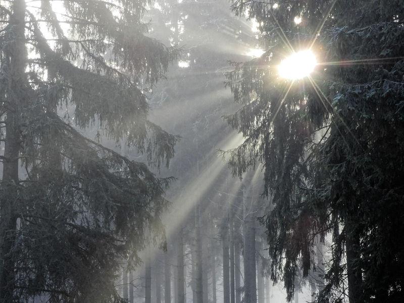 Nebel Sonnenstrahlen Adventure Baumwipfel Day Fichtenwald Forest Hochwald Nature No People Outdoors Snow Sunshine Tree Waterfall Winter