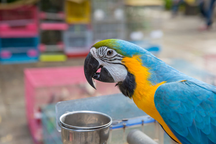 Close-Up Of Gold And Blue Macaw Perching Outdoors