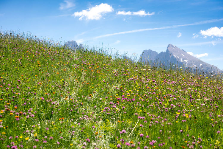 Scenic view of flowering plants on field against sky