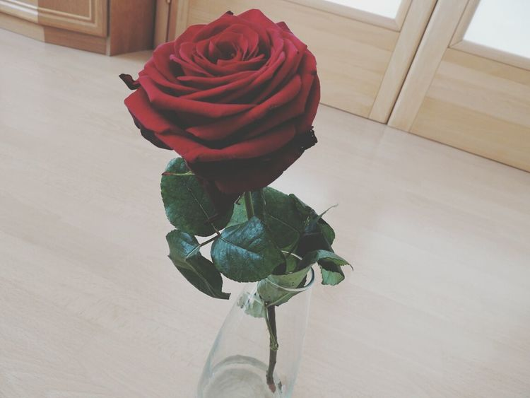 Valentine's Day  Redroses