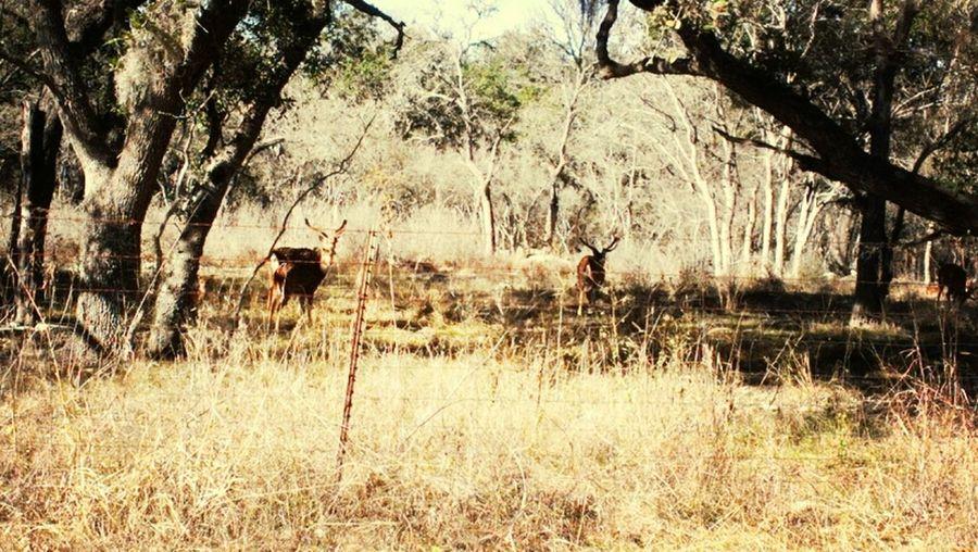 Yesterday Seeing The Deer