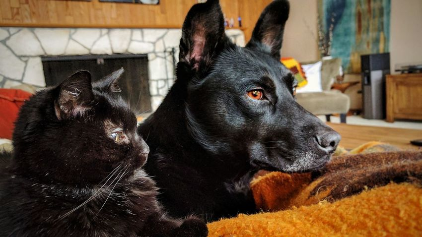 Domestic Animals Pets Dog Animal Themes Mammal No People Close-up Indoors  Pet Portraits Cats Cats And Dogs Buddies Pet Buddies